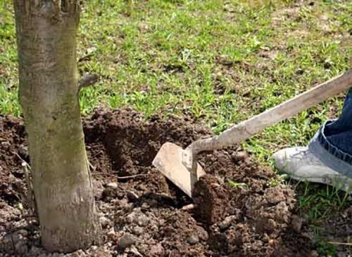 Работы в сентябре на приусадебном участке. Осенняя подготовка почвы к зиме
