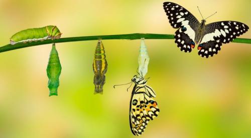 Бабочки и гусеницы. Откуда появляются гусеницы: жизненный цикл бабочек