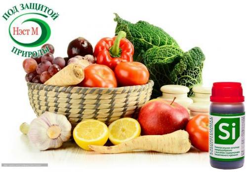 Томаты семена лучшие сорта. Лучшие сорта томатов для открытого грунта
