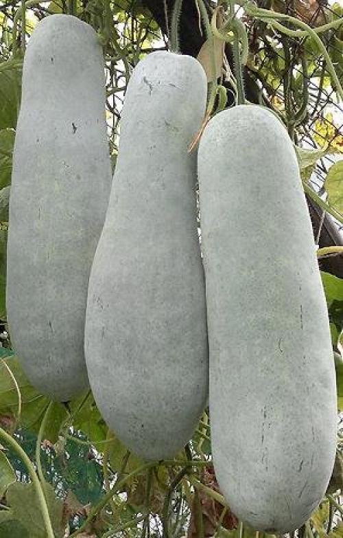 Необычные овощи на огороде. Экзотика на огороде