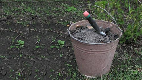 Удобрение для огорода осенью. Древесная зола
