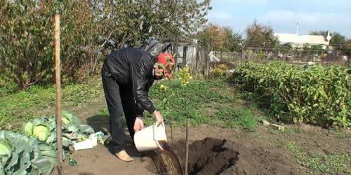 Какие огородные культуры сажают под зиму. Что сажают осенью в саду и огороде