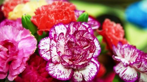 Красивые цветы для сада цветущие все лето многолетние. Многолетние цветы для дачи, цветущие все лето