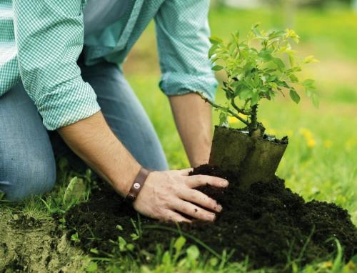Когда можно сажать саженцы осенью плодовых деревьев. Посадка и пересадка деревьев осенью: рекомендации опытных садоводов