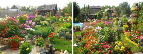 Долгоцветущие многолетние цветы. Многолетние цветы для дачи