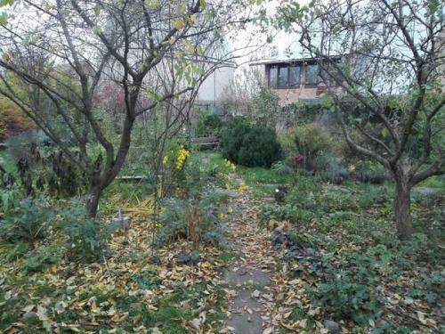 Как поливать осенью. Осень: подзимний влагозарядный полив