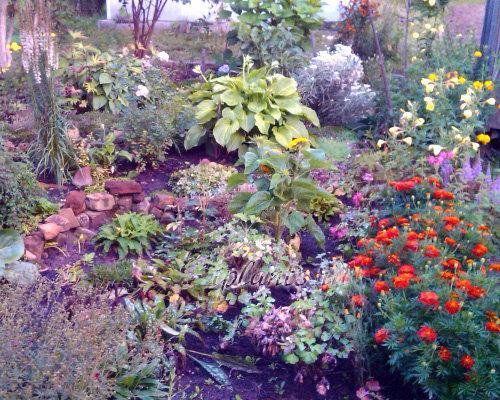 Цветы которые сажают под зиму. Посадка многолетников осенью