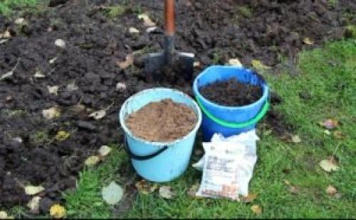Подкормка растений осенью для новичков. Рекомендации по подкормке кустарников осенью