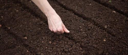 Что посадить в огороде под зиму. Посадка культур под зиму, что лучше посадить осенью на огороде