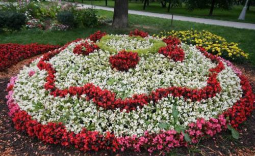 Неприхотливые цветы для клумбы цветущие все лето многолетники. Однолетники или многолетники — критерии выбора