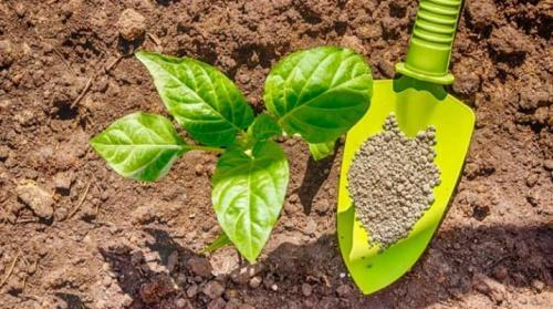 Фосфорные удобрения их значение и применение. Виды фосфорных удобрений и их применение