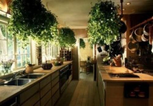 Цветы для кухни по фен-шуй. Растения для кухни по фен шуй