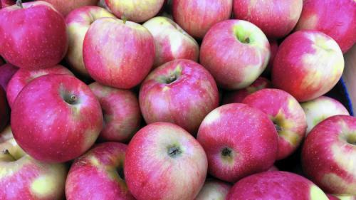 Сорта зимних яблонь. Всё про зимние сорта яблок