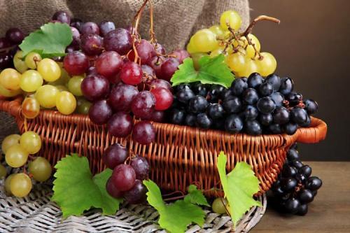 Самые вкусные сорта винограда. Лучшие сорта винограда: фото, названия и описания (каталог)